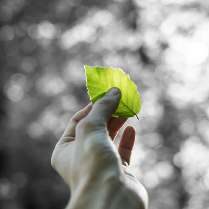 sustainability fabric